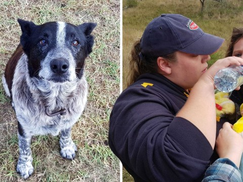 Deaf dog who protected missing girl, 3, in the wild is made honorary police dog