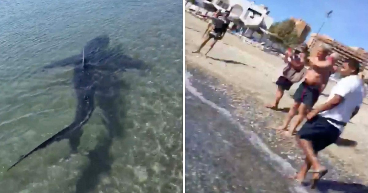 10ft shark sparks panic after being spotted close to beach in Costa del Sol