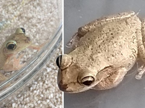 Family accidentally brings exotic frog home to UK from Florida