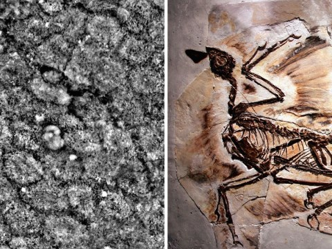 Dinosaurs were the first creatures on Earth to have dandruff, scientists discover