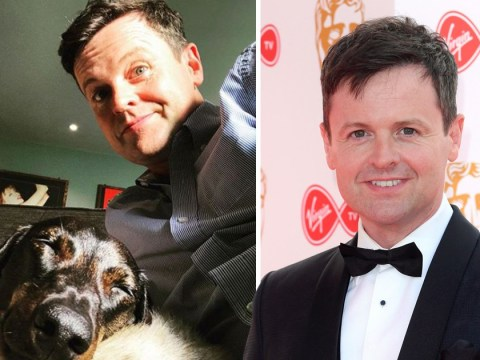 Declan Donnelly given moral support by dog Rocky ahead of hosting BGT without Ant McPartlin