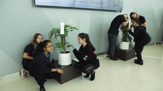 Ikea asked students to bully one plant and compliment another, and the results will floor you (Picture: Ikea UAE)