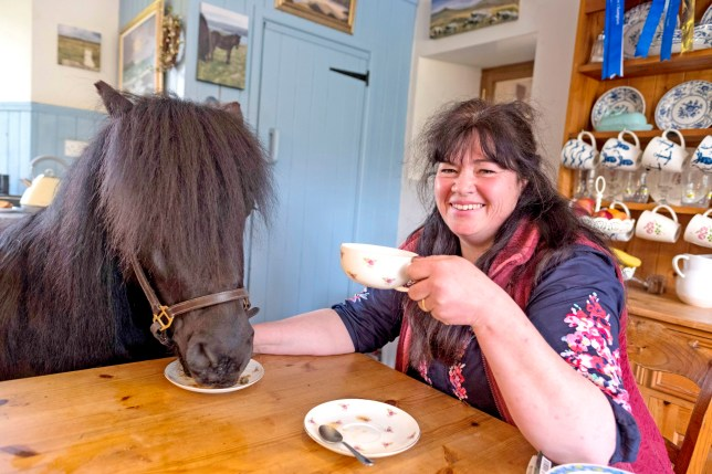 PIC FROM CATERS NEWS - (PICTURED Tricia with Pony Baylah) A lady with a love for Shetland ponies is happy to have them inside her home - and they even drink tea from a cup and saucer! Equine lover, Tricia Nassau-Williams, 56, from Advent, North Cornwall, is often showing her Standard Shetland pony, Baylah, off in the show ring at shows but when relaxing at home Baylah comes into the kitchen for a cuppa and a carrot. The five-year-old mare is described as the nosy neighbour twitching the net curtain, by her owner who works as a lecturer for The Loriners Company, one of the Livery Companies of the City of London. Lorinery is all the metalwork on a horses saddle and bridle with a particular focus on the bit. SEE CATERS COPY