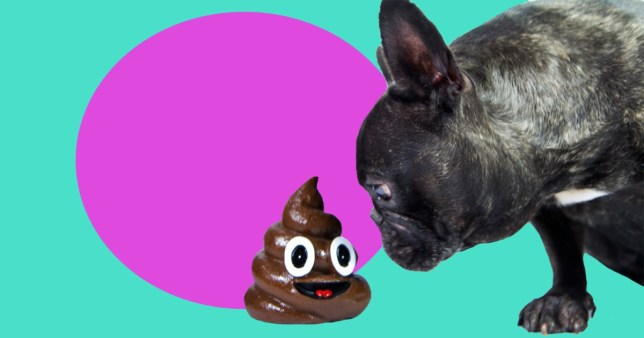 Why do dogs eat their own poo?