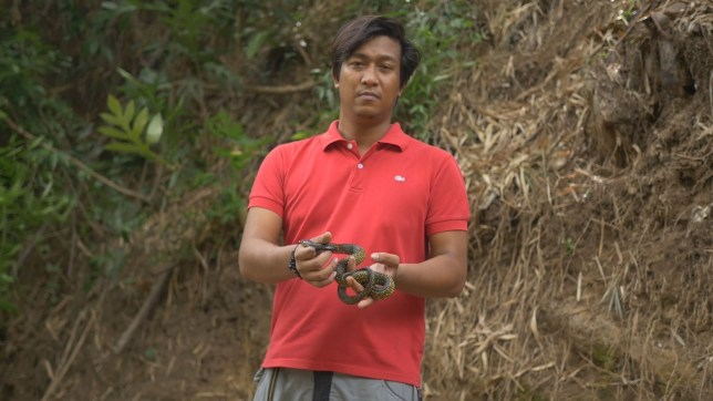 VIDEO STILLS - Meet the Filipino snake catcher who has been bitten so many times he has become immune to COBRA VENOM - and lets them bite him once a week to maintain his strength. Joe Fernando Quililan, 31, started handling the wild reptiles as a hobby when he was just 14 - tracking them down in the jungle and removing them from neighbours' homes. Since then Joe - dubbed ''venom man'' - has suffered hundreds of bites, been ''hospitalised and almost died five times'', and had his right index finger amputated after a viper bite. Incredibly, Joe allows a deadly cobra to bite hime ONCE A WEEK because he believes it maintains his body's resistance to the venom that would normally kill people. Medics have confirmed that Joe has an abnormally high amount of antibodies but are at a loss to explain his immunity - saying he is the first person they have found who can handle such bites. Footage taken yesterday (Mon) at Joe's home in Cagayan de Oro, Philippines, shows him allowing a deadly Philippines Cobra to bite his right arm. The bite would normally cause instant breathing problems and unconsciousness in its victims - in some cases leading to death - but super-human Joe simply shrugs off the wound - saying he can feel the ''warmth of the venom run through his veins''. Joe said he ''frequently'' allows snakes to bite him in order to keep his resistance high.???PLEASE SEE VIDEO DESK AND WIRE FOR FULL COPY