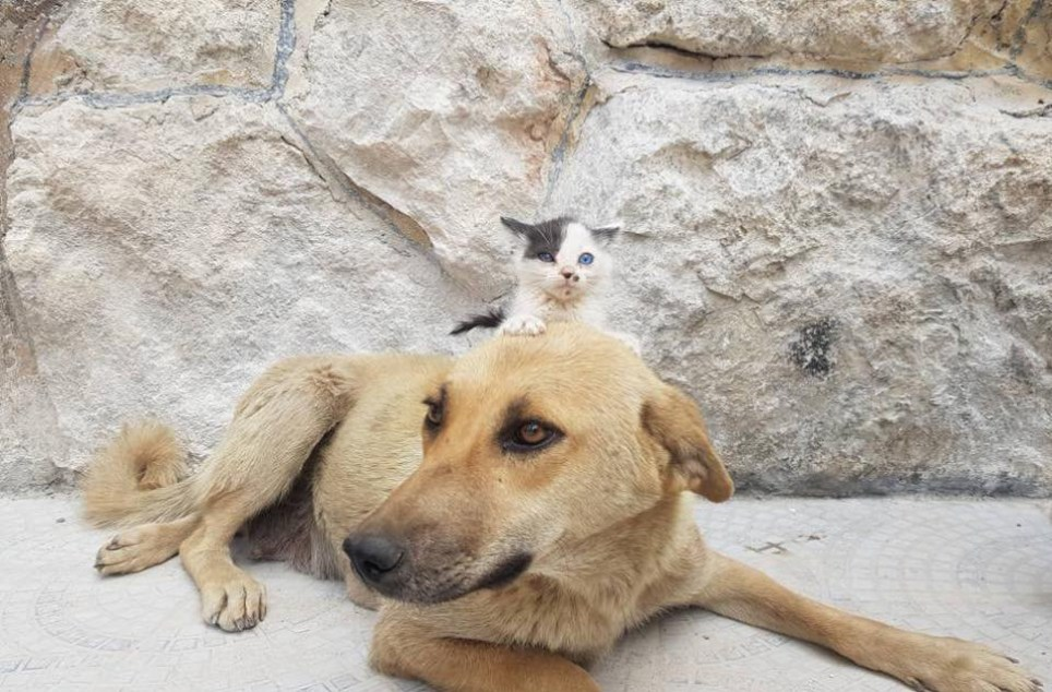 Junior (kitten) and Amira (dog) (Picture: @TheAleppoCatMan/Facebook)