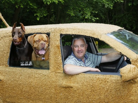 Man chauffeurs his dogs around in a special car covered in faux fur