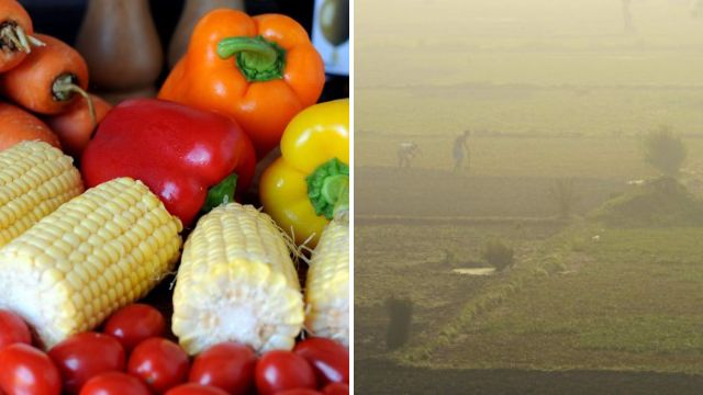 World's supply of vegetables plummets because of climate change