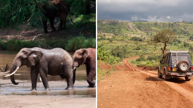 Elephant poachers shot dead by rangers as they tried to steal tusks