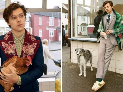 Harry Styles' new Gucci campaign features a chip shop, a dog and a bored-looking chicken