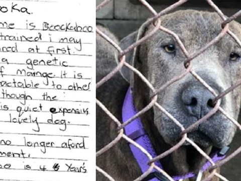 Dog found abandoned with nothing but a heartbreaking note from previous owners