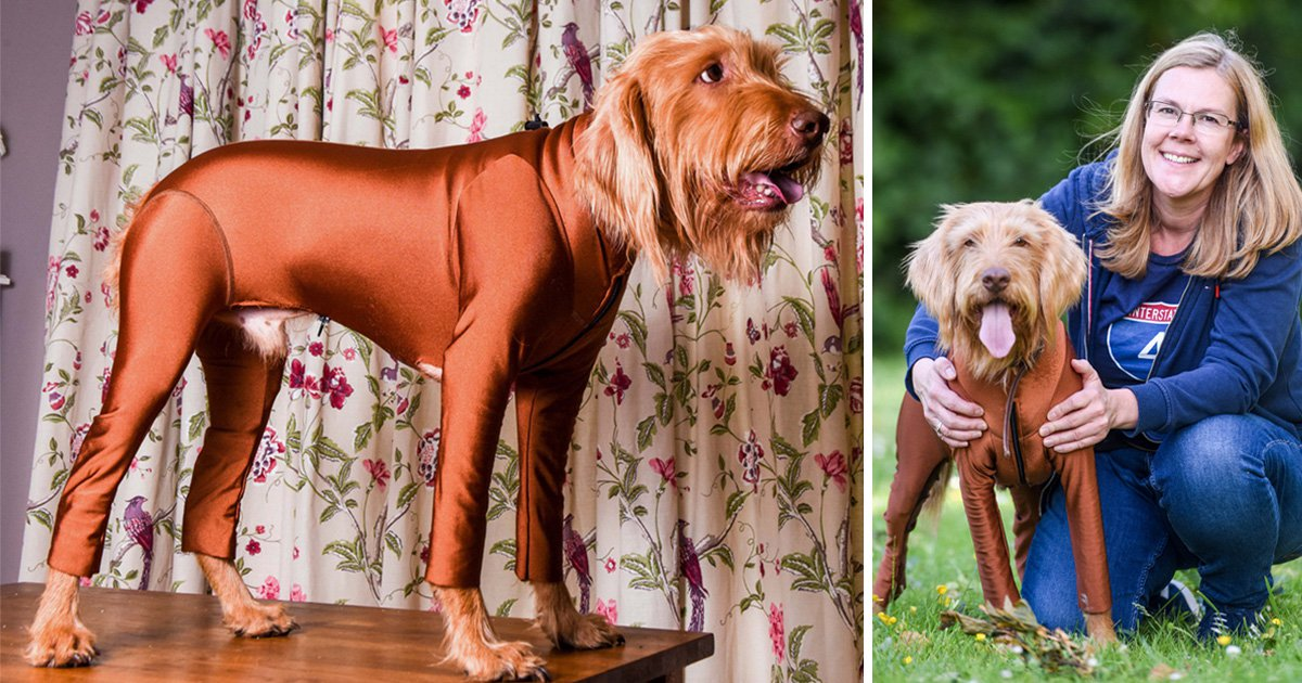 Dog with hayfever gets a onsie