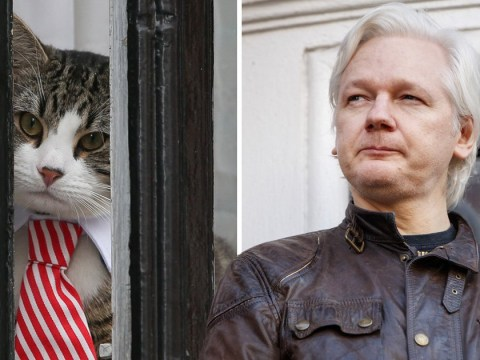 Everything we know so far about Julian Assange's 'Embassy Cat'