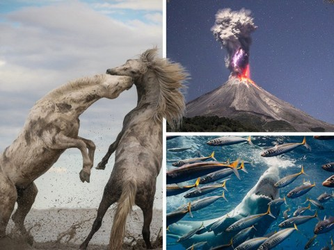 The winners of the 2018 Nature Conservancy photo contest are pretty spectacular