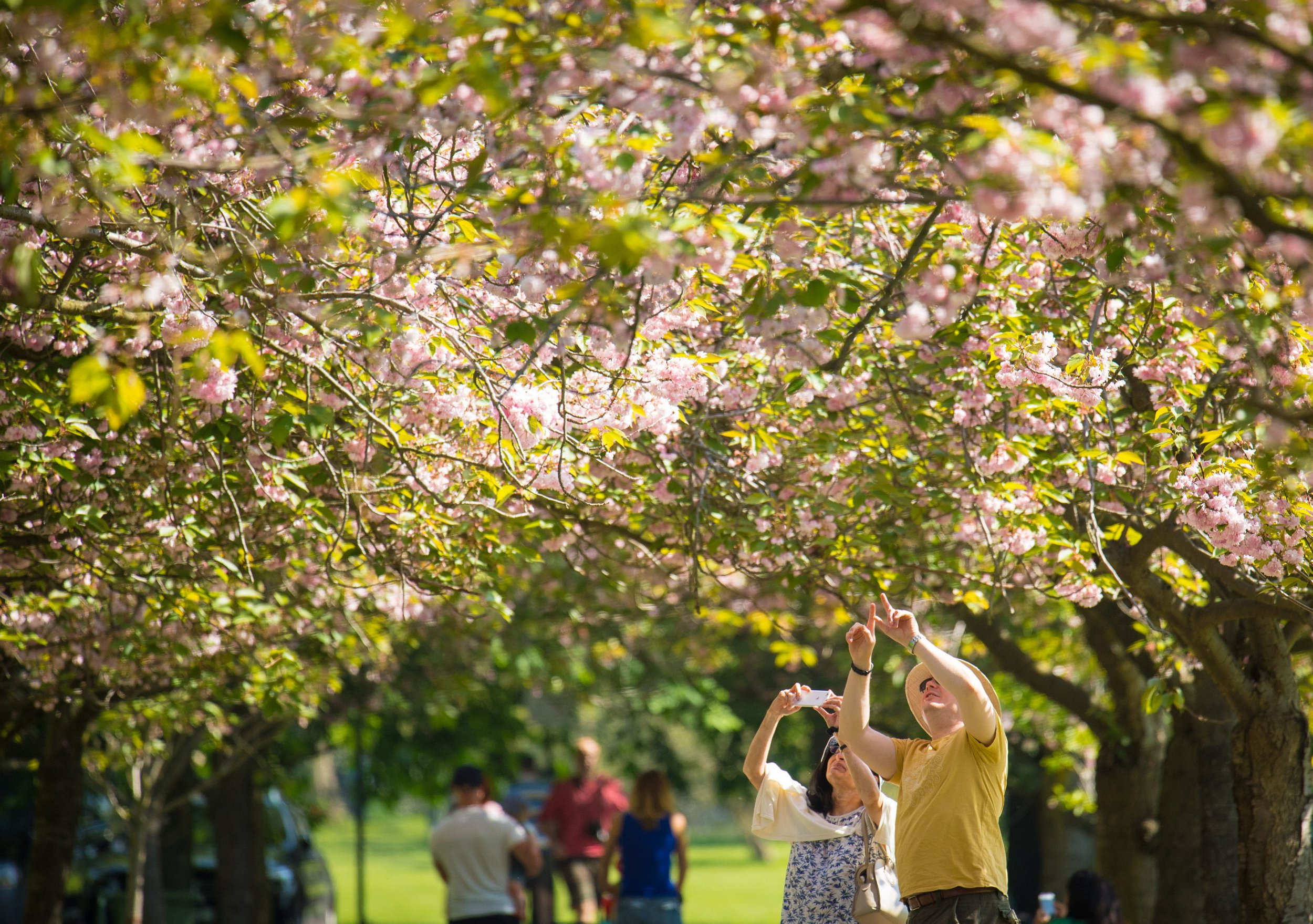 People look at cherry trees in blossom as they enjoy the warm and sunny weather in Greenwich Park, south London, on what is set to be the hottest May Bank Holiday Monday since records began. PRESS ASSOCIATION Photo. Picture date: Monday May 7, 2018. See PA story WEATHER Hot. Photo credit should read: Dominic Lipinski/PA Wire