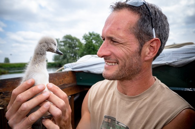 """Rob Adamson, 39 with Sidney the Cygnet on Rob's boat at Jones boat yard in St Ives, Cambridgeshire. See Masons Copy MNGYGNET: An abandoned cygnet which was left for dead by its mother has become the best of friends with a builder who rescued it from the river bank.Rob Adamson, 39, took in little Sidney after the young swan was attacked over night at a boatyard last week by another animal.The pair now do everything together - including shopping trips and kayaking. Rob said: """"To get the opportunity to look after a cygnet, you're not going to get that again. """"I am a wildlife lover so this is a dream come true for me to look after him like this."""