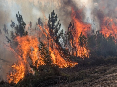 British pensioner, 78, arrested 'for starting forest fires on holiday in Spain'