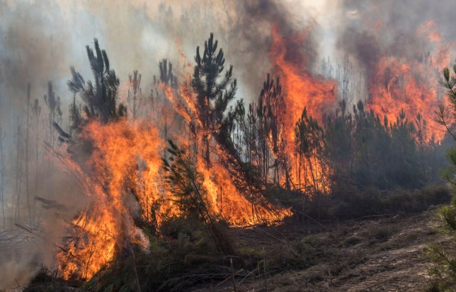 VILA DE REI, PORTUGAL - AUGUST 14: A forest fire on August 14, 2017 in Vila de Rei, Portugal. Firefighters from Spain are helping Portuguese firefighters and military personnel in the area in their efforts trying to control the numerous fires in the country. The Portuguese government has asked for EU help to combat hundreds of forest fires in both Centro and Norte regions of the country. (Photo by Horacio Villalobos - Corbis/Corbis via Getty Images)