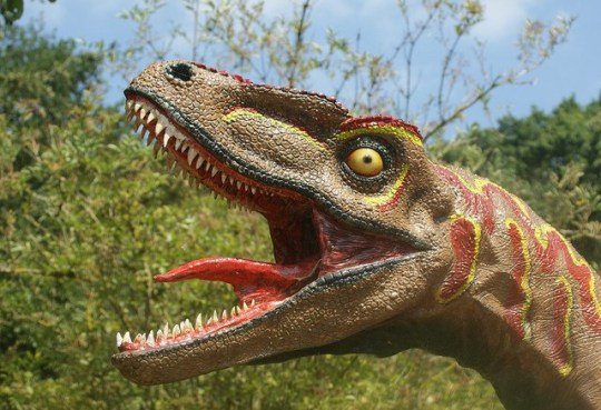 "This handout photograph obtained June 20, 2018 courtesy of Spencer Wright shows a sculpture of a dinosaur with its tongue waving wildly, a feature that is incorrect, according to new research led by The University of Texas at Austin and the Chinese Academy of Sciences. The tongue of the T-Rex remained at the bottom of its mouth, as in the alligator, according to fossils discovered by archaeologists in the north of China, which contradict animations and sculptures sometimes seen in museums, according to Julia Clarke from the University of Texas at Austin. The conclusion is also valid for most dinosaurs, advancing studies from the University of Texas to Austin and the Chinese Academy of Sciences, whose work was published on Wednesday, June 20, 2018 in the scientific journal PLOS One. / AFP PHOTO / Spencer Wright / Spencer Wright / == RESTRICTED TO EDITORIAL USE / MANDATORY CREDIT: ""AFP PHOTO / Spencer WRIGHT"" / NO MARKETING / NO ADVERTISING CAMPAIGNS / DISTRIBUTED AS A SERVICE TO CLIENTS == SPENCER WRIGHT/AFP/Getty Images"