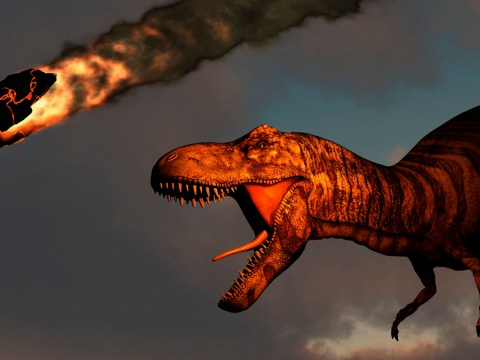 Here's what happened on the day an asteroid hit Earth and killed the dinosaurs