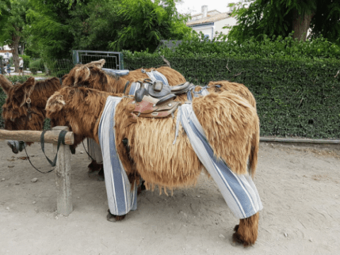 In some parts of the world, donkeys wear chic trousers