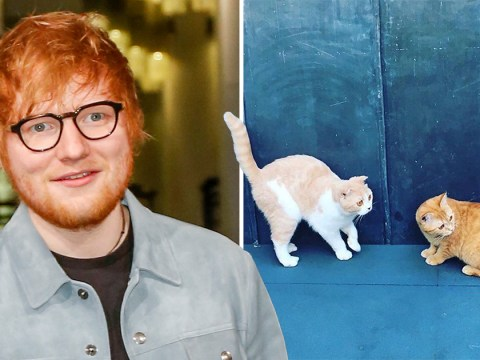 Ed Sheeran's 'clever pussies' are now on Instagram and we can't look away