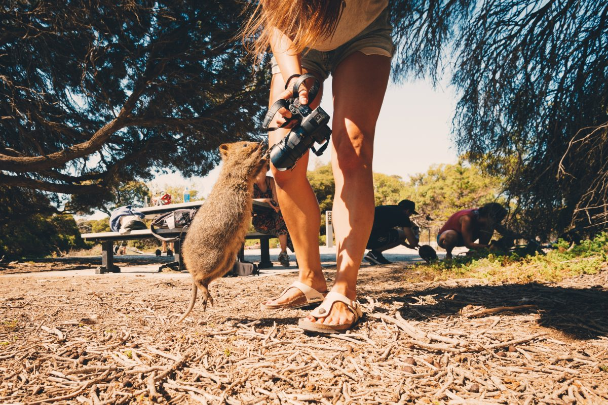Things you need to know before you apply for an Australian working holiday visa