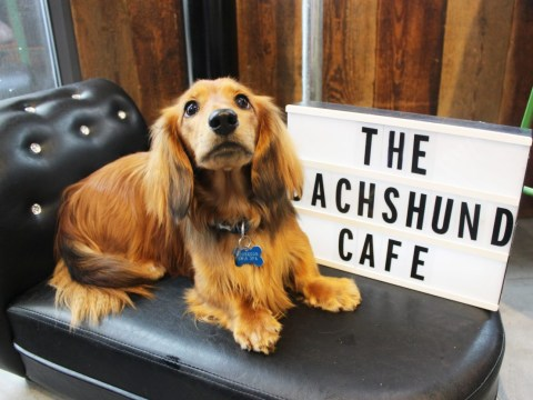 A sausage dog cafe is coming to London