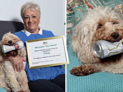 Litter-picking dog gets award for cleaning up beer cans and coffee cups