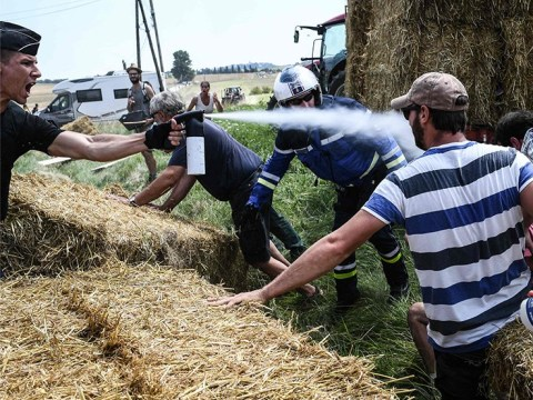 Tour de France halted after riders are hit with pepper spray fired by police