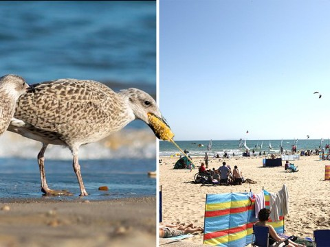 Beachgoers blasted for causing seagull to 'choke' on corn on the cob