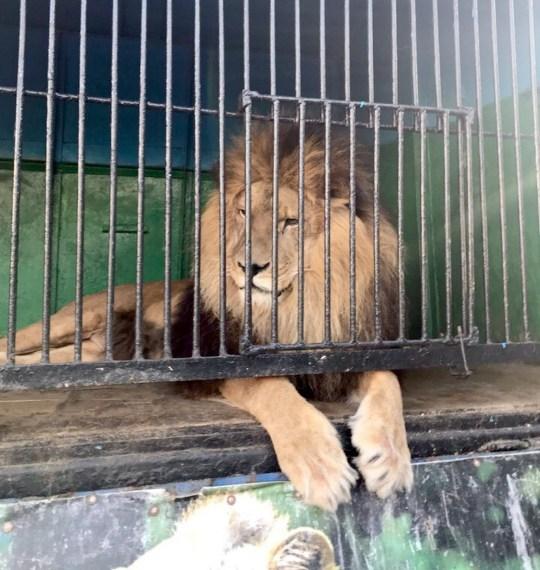 Ryazan traveling zoo Noah's Ark