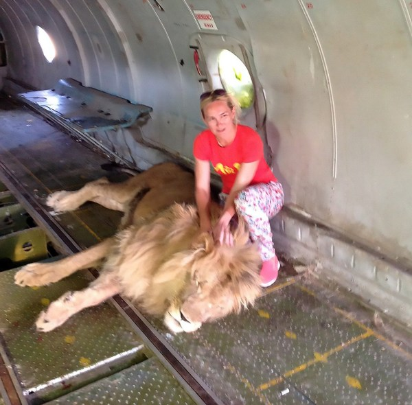 """Pic Shows: Olga posing beside the lion before being bitten; A woman has been mauled by a lion after going into its enclosure to take a selfie with the zoo director made famous when he used his slipper to keep the animals under control. And incredibly, despite horrific injuries that have left her crippled, he allegedly refused to let her call an ambulance and had her treated by the zoo vet, giving her cognac instead of an anaesthetic and then telling media the attack happened because she was drunk. Olga Solomina, 46, said she was posing for a selfie at the Taygan safari park located in the Crimea region in Ukraine when the lion suddenly grabbed her arm and dragged her away. She said: """"I squatted down and put my hand on the lion as I was told. Next moment it grasped my arm and dragged me like a rag doll. The other lions jumped to their feet. I closed my eyes in fear waiting to be torn apart by the pride. It lasted several seconds that felt like eternity for me."""" Many people had flocked to the zoo after its owner made headlines around the world using his slipper to throw it at the dominant lion when he spotted it bullying a young lioness. Incredibly, there were people sitting in an opensided vehicle in the enclosure with him, filming what was going on. The remarkable footage of the lions cowed by the slipper went viral worldwide, and Olga was one of those people who decided to take the tour. The woman from the western Russian city of Kirov said she was only saved when slipper throwing Oleg Zubkov chased the lions off, and put her back in the opensided vehicle to drive her to the zoo offices. He had covered Ms Solomina's badly injured arm with a towel and she said: """"He [Mr Zubkov] asked me not to call the police or an ambulance, saying that my injuries were not dangerous. """"At his office, his secretary treated my lacerations with hydrogen peroxide. Then a veterinarian came. He injected me with lidocaine and stitched the wounds. Instead of anaesthetising me they"""