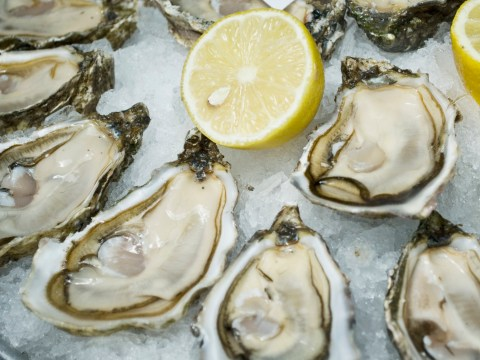 Raw oysters are alive when you eat them