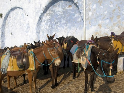 Fat tourists are crippling donkeys that carry them on holiday in Greece