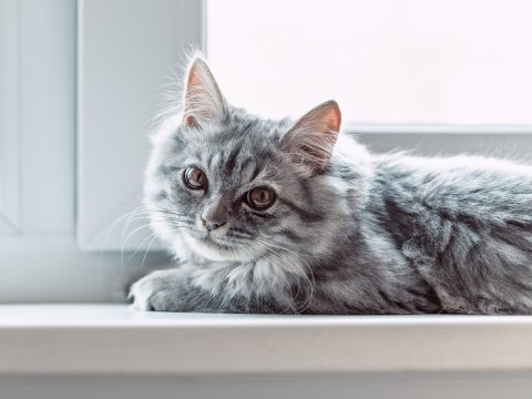 How to choose a name your cat will actually answer to
