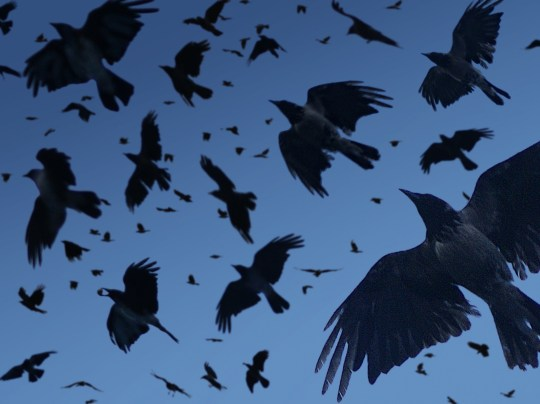 Crows in the Wind