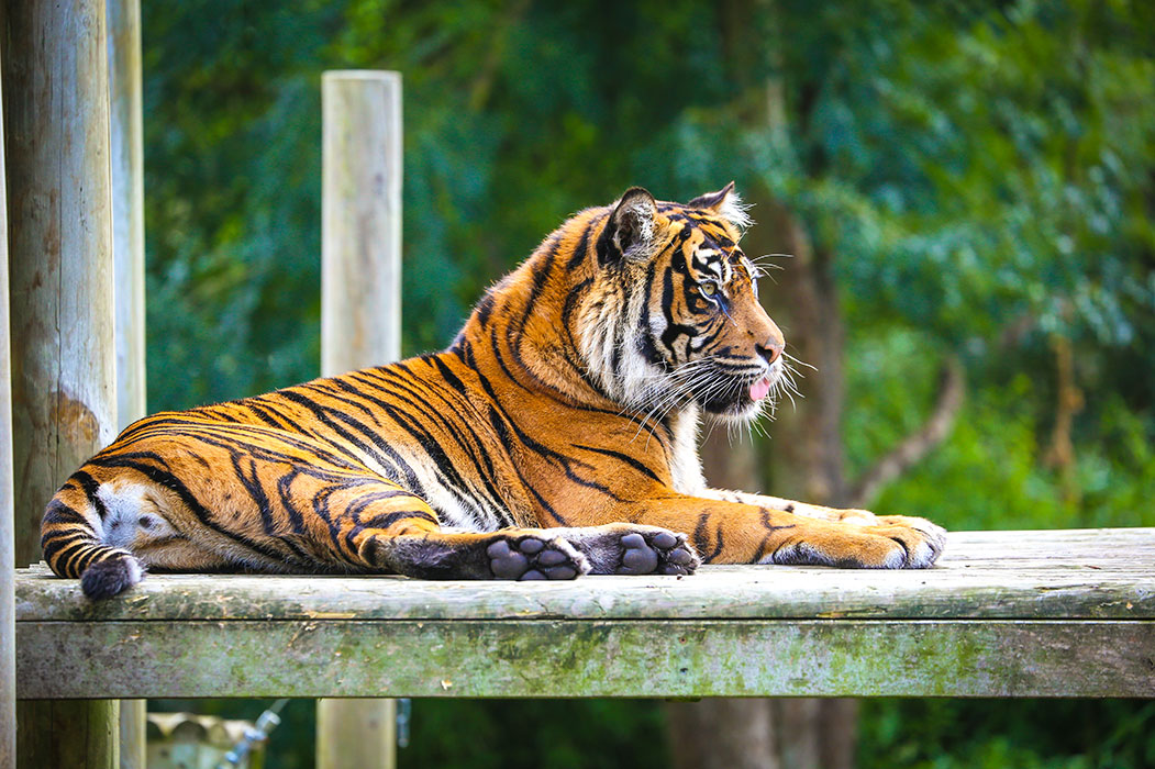 Chessington World Of Adventures review – I stayed in a hotel with a tiger bursting through the wall so you don't have to