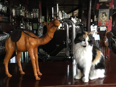 The Camel in Bethnal Green is the best pet-friendly pub in the world