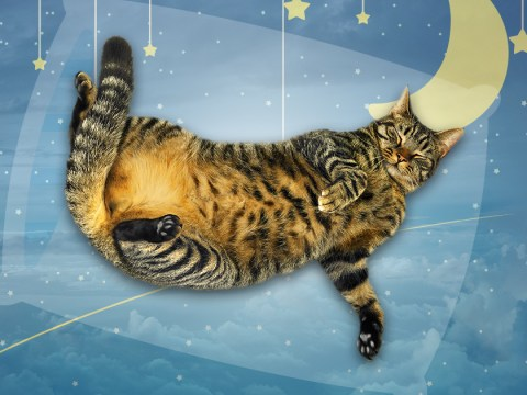 What do cats dream about?