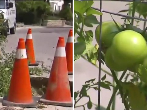 People so fed up with huge pothole they grow tomatoes in it