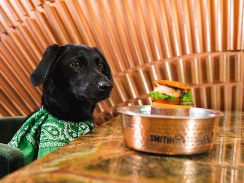 A London restaurant is offering free dog burgers for a whole week
