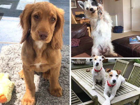 People are using National Dog Day as an excuse to show off their cute pets