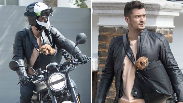 Orlando Bloom is upstaged by his poodle Mighty as he hops on motorcycle for photo shoot