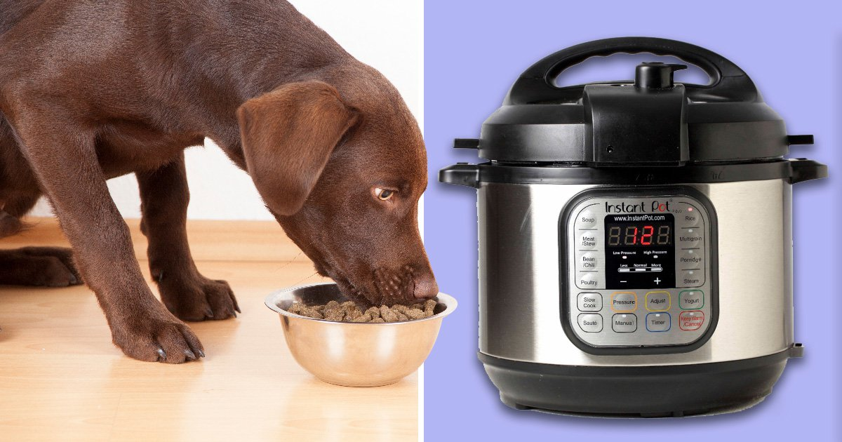 Doggy hot meal kits are going to be a thing