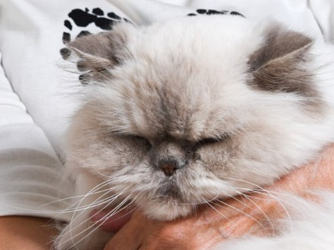 71-year-old woman gets her first tattoo in honour of her dying cat Twerpy