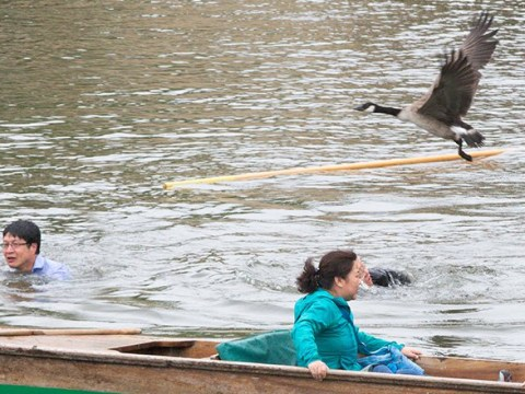 Tourists end up in river after being dive-bombed by flock of angry geese