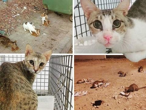 Meet the British woman saving street cats in Oman
