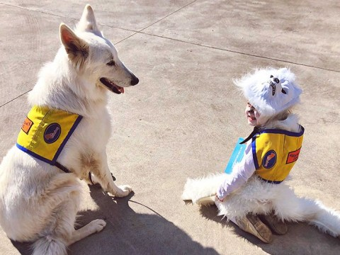 Little girl dresses as her aunt's assistance dog for Book Week