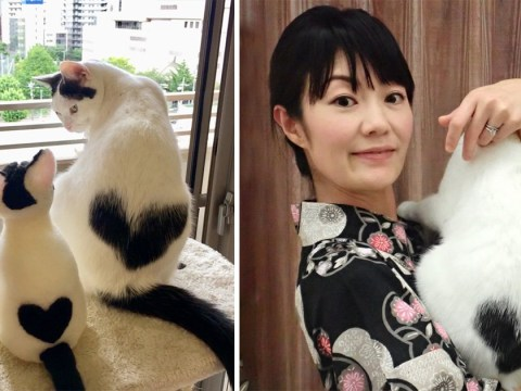 Cat with heart-shaped marking is melting hearts
